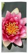 Pink Waterlily And Cloud Reflection Beach Towel