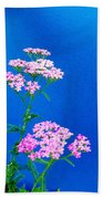 Pink Yarrow Beach Towel