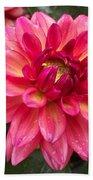 Pink Zinnia Flower Beach Towel