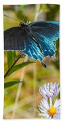 Pipevine Swallowtail On Asters Beach Towel