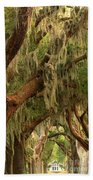 Plantation Oak Trees Beach Towel
