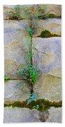 Plants In The Brick Wall Beach Towel