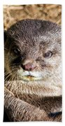 Play Time For Otters Beach Towel