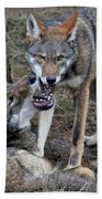 Playful Wolves Beach Towel