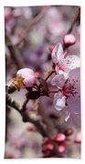 Plum Blossoms 12 Beach Towel