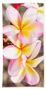Plumerias Of Paradise 4 Beach Towel