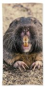 Pocket Gopher Chatting Beach Towel