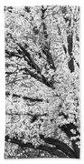 Poetry Tree Beach Towel