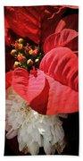 Poinsettia In Bloom Beach Towel