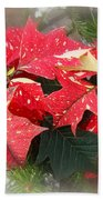 Poinsettia In Red And White Beach Towel