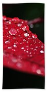 Poinsettia Leaf With Water Droplets Beach Towel