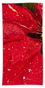 Poinsettia Beach Towel