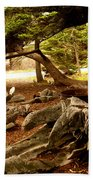 Point Lobos Whalers Cove Whale Bones Beach Towel by Barbara Snyder