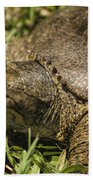 Pointed Nose Florida Softshell Turtle - Apalone Ferox Beach Towel