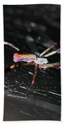Points Of Contact - Spider - Orb Weaver Beach Towel