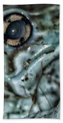 Poisonous Frog Eye Beach Towel