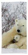 Polar Bear And 3 Month Old Cubs Beach Towel