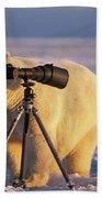 Polar Bear Investigating Photographers Beach Towel