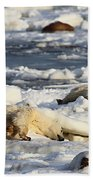 Polar Bear Mother And Cub Grooming Beach Towel