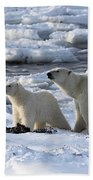 Polar Bear Mother And Cub Sniffing The Air Beach Towel