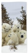 Polar Bear Ursus Maritimus Mother And Cubs Beach Towel