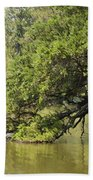 Pond At Norfolk Botanical Garden 10 Beach Towel