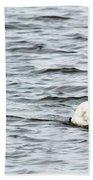 Pond Swan Beach Towel
