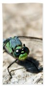 Pondhawk Upclose Beach Towel
