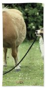 Pony With Lead Rope Held By Sitting Dog Beach Towel