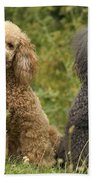 Poodle Dogs Beach Towel
