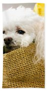 Poodle In Pouch Beach Towel