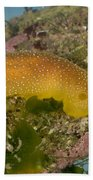 Porostome Nudibranch Beach Towel