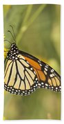 Portrait Of A Monarch Beach Towel