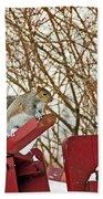 Winter Squirrel Beach Towel