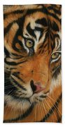 Portrait Of A Tiger Beach Towel by David Stribbling