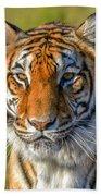 Portrait Of A Tiger Beach Towel