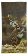 Portrait Of A White Tailed Buck Beach Towel