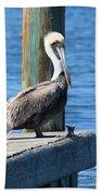 Posing Pelican Beach Towel by Carol Groenen