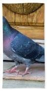 Posing Pigeon  Beach Towel