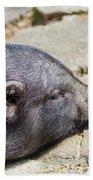 Potbelly Pig Beach Towel