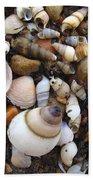 Potomac Shellscape Beach Towel