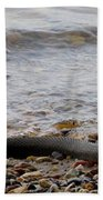 Potomac Water Snake Beach Towel