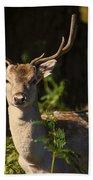Powderham Deer  Beach Towel