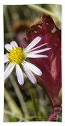 Prairie Flower And Red Lambs Quarter Beach Towel