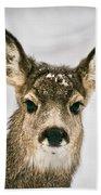 Precious - Mule Deer Fawn - Casper Mountain - Casper Wyoming Beach Towel