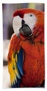 Pretty Bird 2 Beach Towel