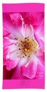 Pretty In Pink Rose Close Up Beach Towel