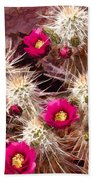 Prickley Cactus Plants Beach Towel