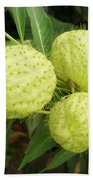 Prickly Balloon Plant Beach Towel
