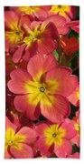 Primrose Flowers Beach Towel